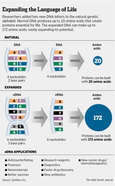 Ce inseamna inca 2 baze ADN